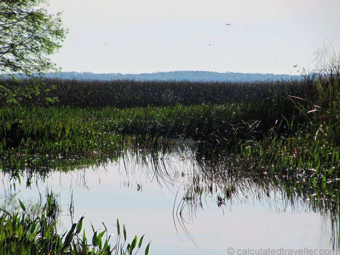 Airboat Tours in St  Cloud, Florida