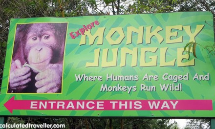 Monkeying Around at Monkey Jungle, Miami Florida