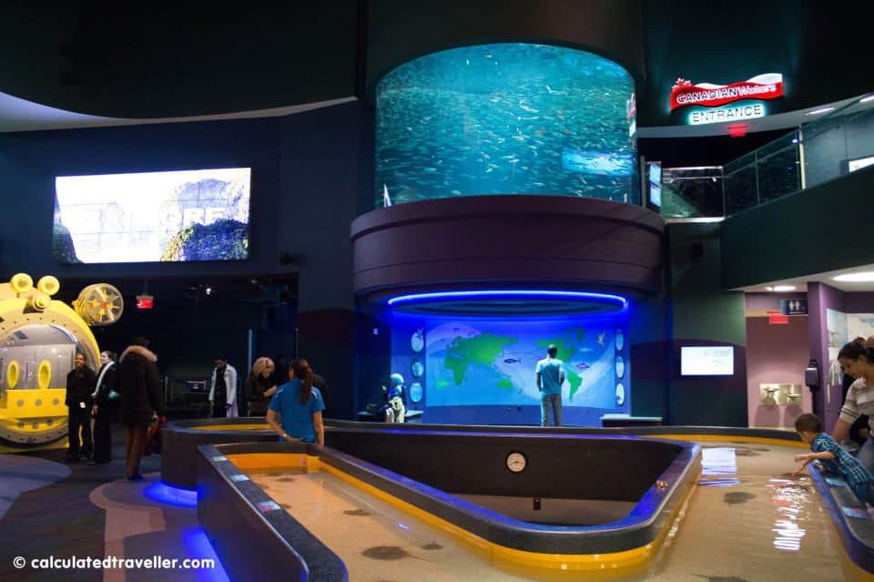 Where to take a date in Toronto - Ripley's Aquarium