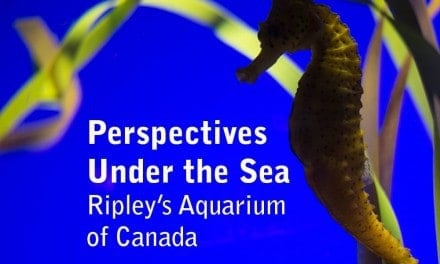 Perspectives Under the Sea: Ripley's Aquarium of Canada