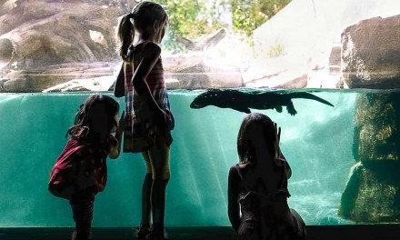 Experience Canada: Calgary Zoo, a must see with the whole family!