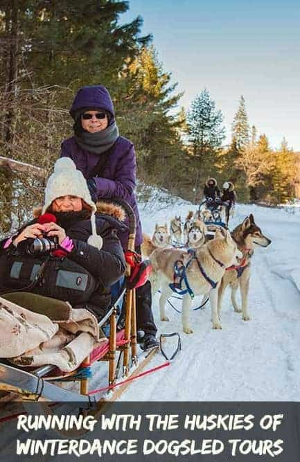 Running with the Huskies of Winterdance Dogsled Tours Calculated Traveller