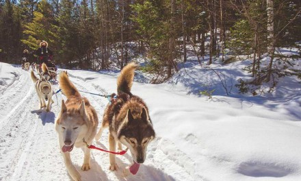 Running with the Huskies of Winterdance Dogsled Tours