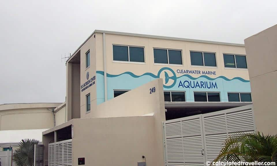 Behind the Scenes at Clearwater Marine Aquarium