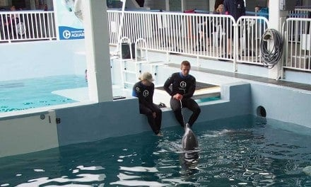 Winter and Hope at the Clearwater Marine Aquarium FL