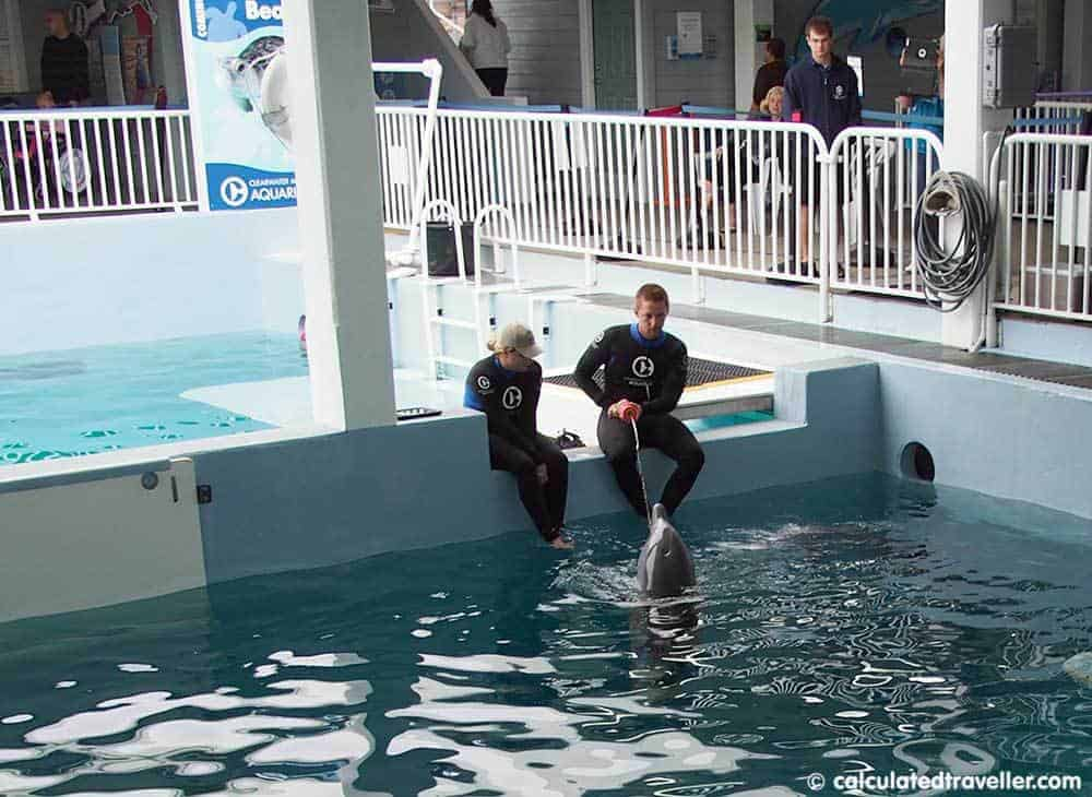 Winter and Hope at the Clearwater Marine Aquarium