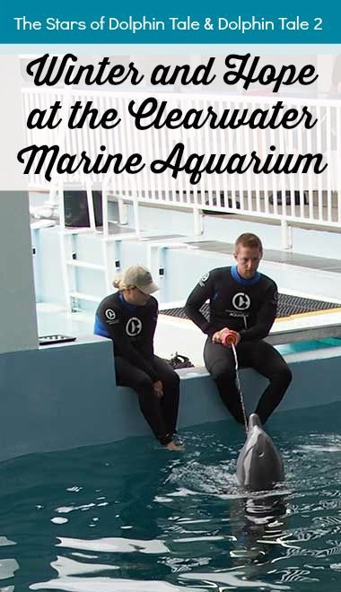 Winter and Hope at the Clearwater Marine Aquarium Florida by Calculated Traveller