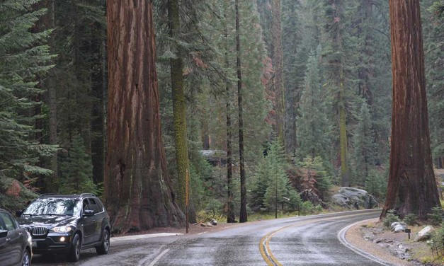 15 Tips for Exploring Sequoia National Park by Car