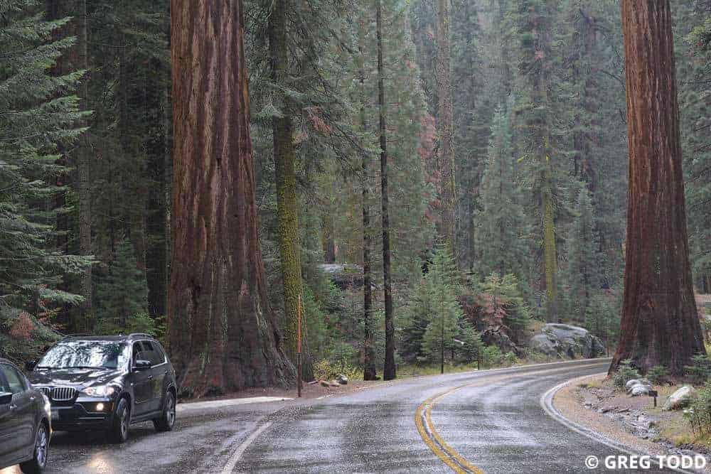 sequoia national park middle eastern singles Late night restaurants in visalia restaurants with outdoor restaurants near sequoia national park $$$ mediterranean middle eastern greek vegetarian friendly.