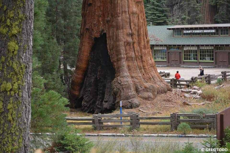 Exploring-Sequoia-National-Park-by-Car-5