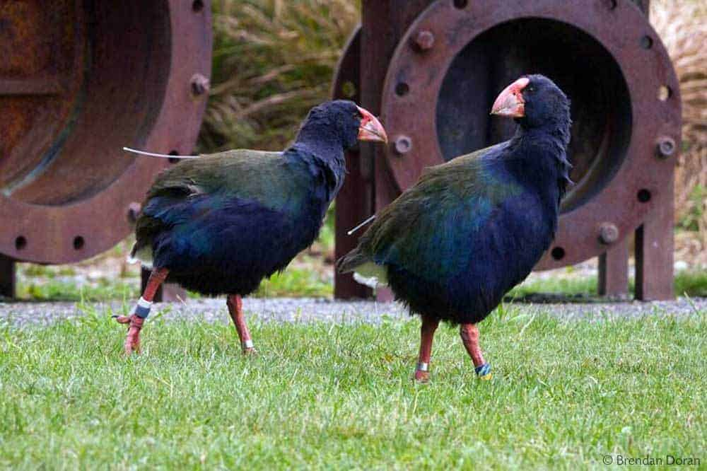 15 Recommended Things to Do in New Zealand - Zealandia