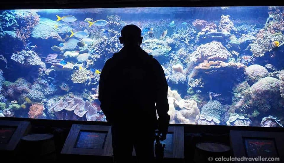 CityPASS Houston Texas - The Best Way to Tour Houston - Downtown Aquarium