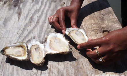 A Pleasure House Oyster Tour in Lynnhaven Virginia