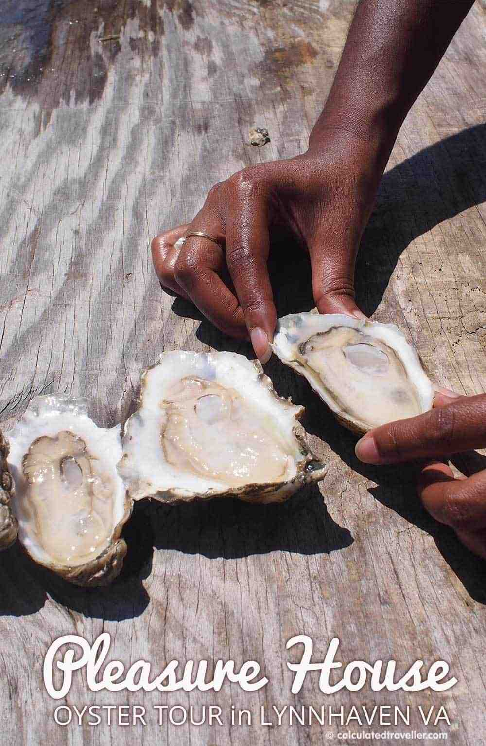 A Pleasure House Oyster Tour in Lynnhaven Virginia by Calculated Traveller Magazine