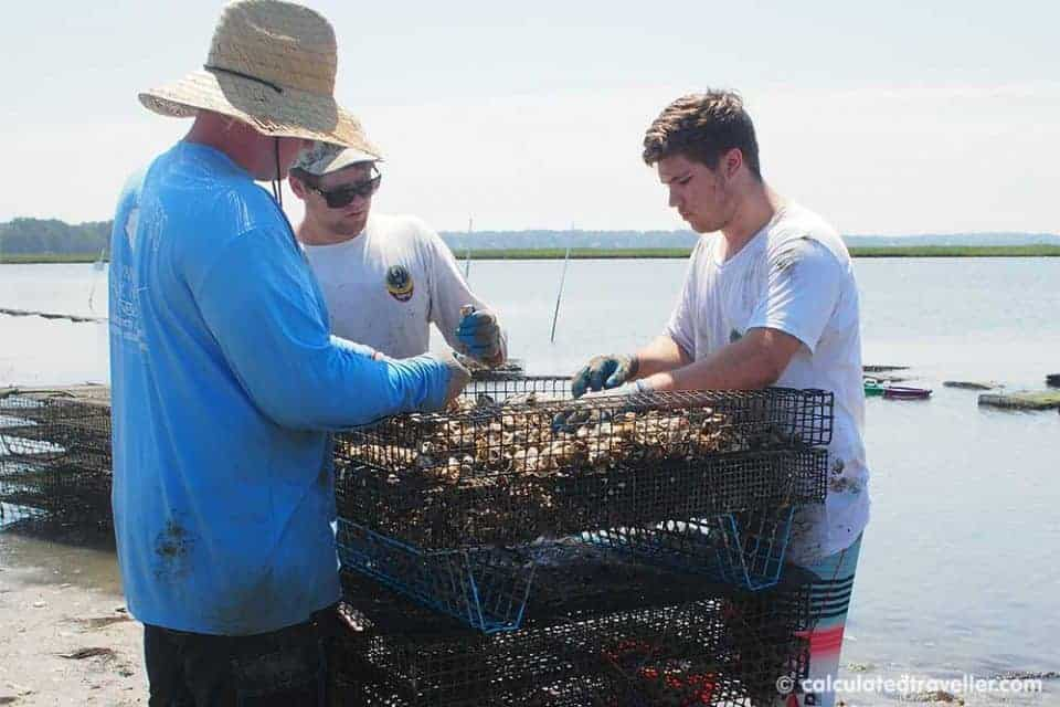A Pleasure House Oyster Tour in Lynnhaven Virginia. Staff hard at work