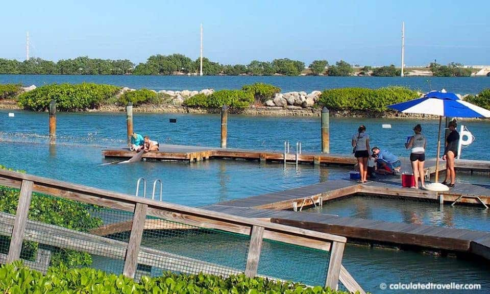Tranquillity at Hawks Cay Resort Duck Key Florida - Dolphin Connection