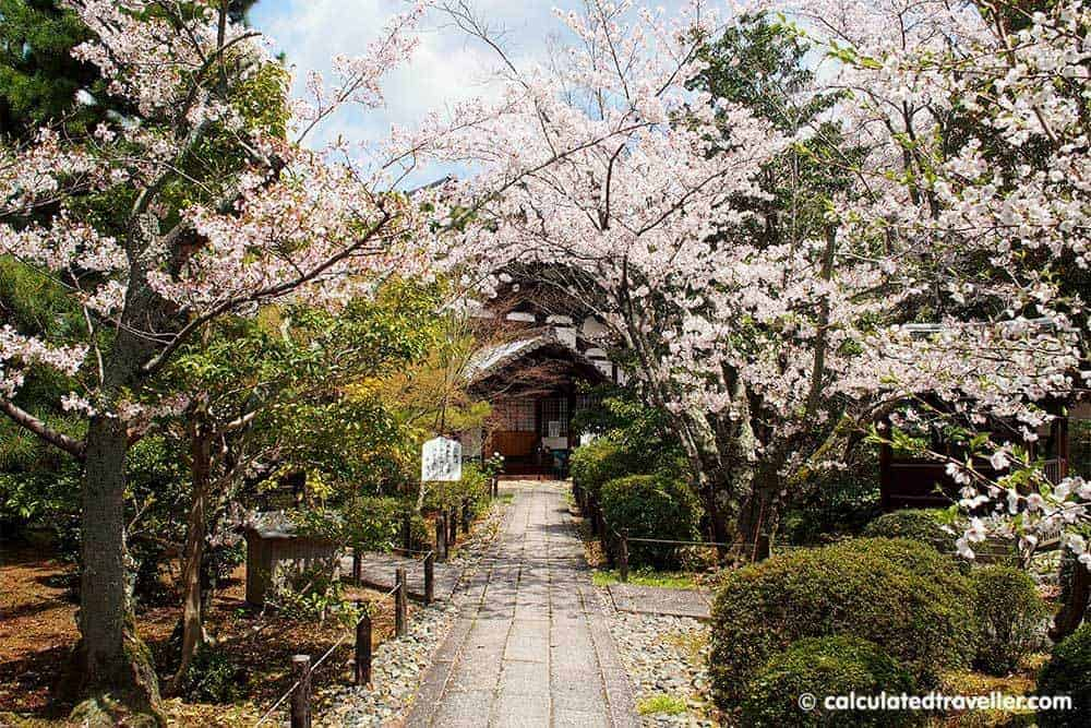 Modern Japan: 10 Things to Know - Cherry Blossoms
