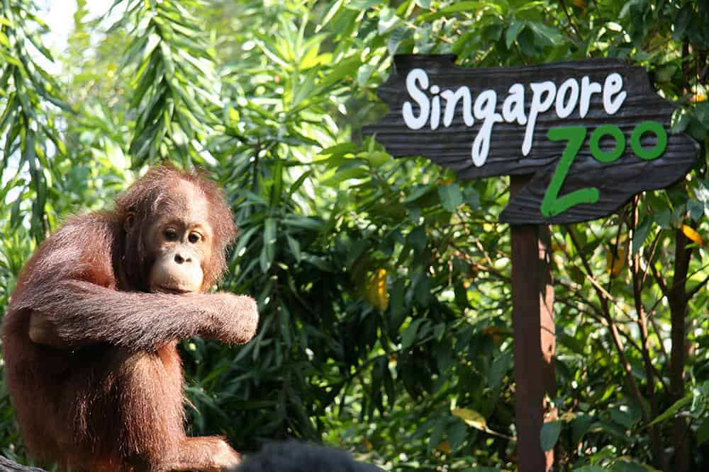 Family-Friendly Animal Fun in Singapore - Singapore Zoo