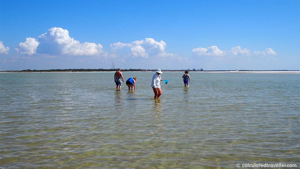 Fun in the Sun on St. Pete Beach Florida at Sirata Beach Resort - Shell Island - looking for sand dollars