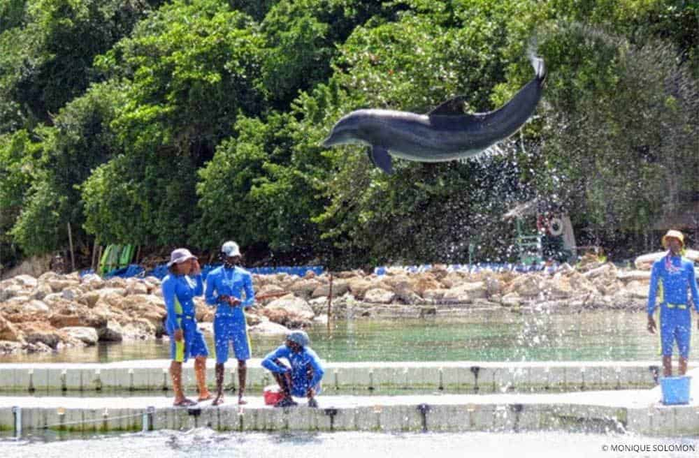 A Local Jamaican Guide to the Top Things to do in Ocho Rios - Dolphin Cove