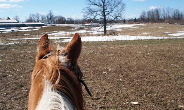 Horseback Riding with Painted Bar Stables at Watkins Glen NY