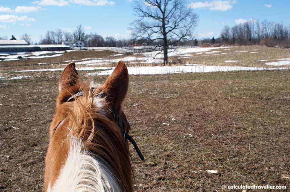 Horseback Riding with Painted Bar Stables at Watkins Glen NY - Trail riding Burdette New York