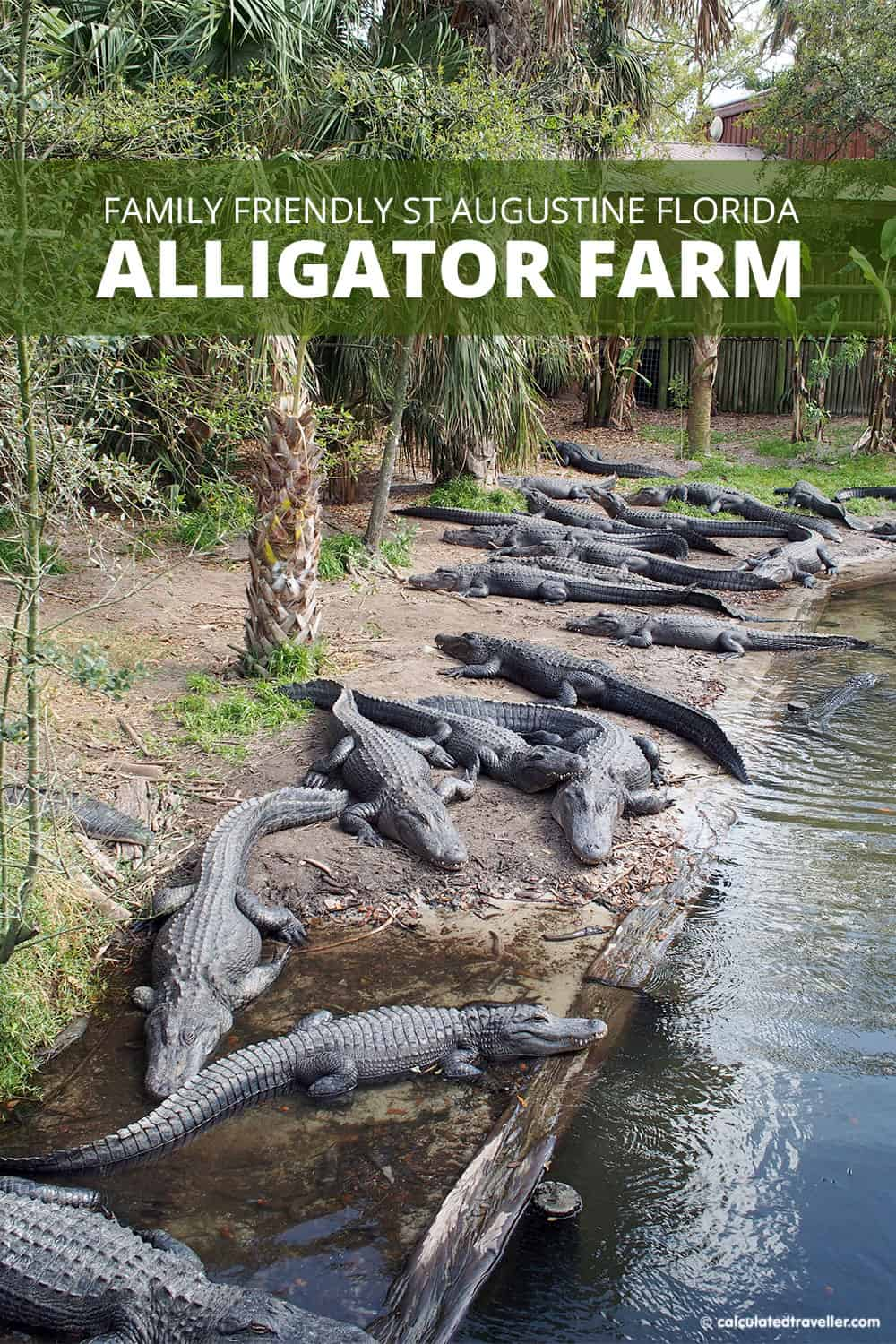 A Traveller's Guide to St Augustine Florida - History and Fun. St. Augustine Alligator Farm and Zoological Park is the prefect family friendly attraction with more than just alligators. #StAugustine #FLorida #family #travel #attraction #children #kids #zoo #animals