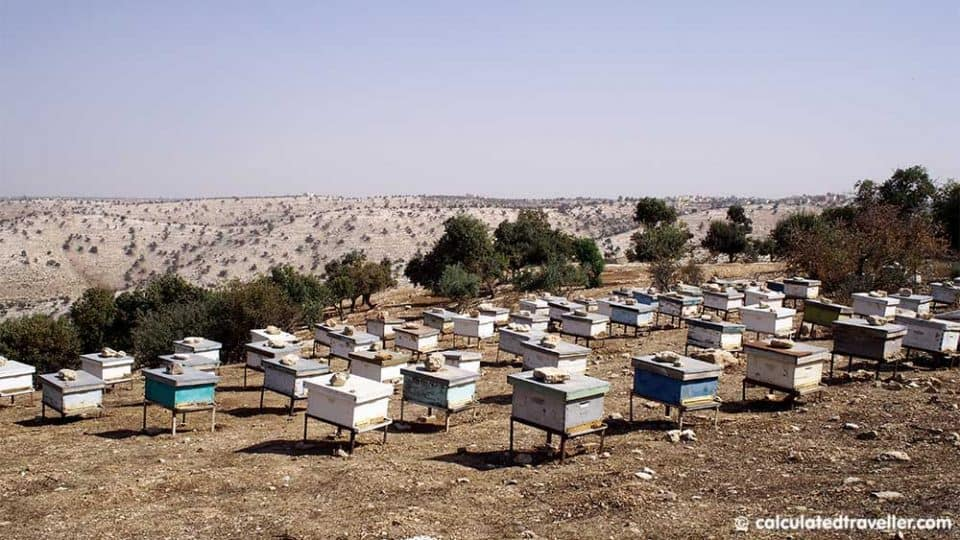 rows of bee hives in the Jordan Valley