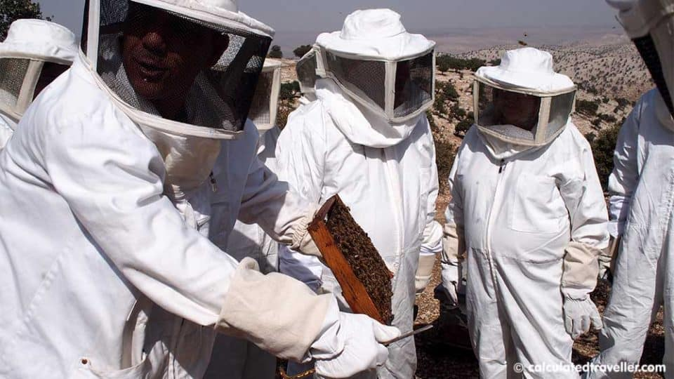 examining the bees in the Jordan Valley